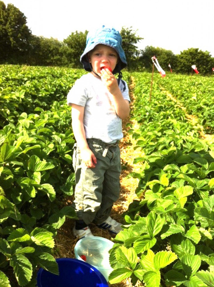 Strawberry Picking in Stuttgart Region